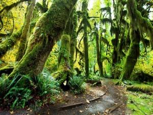 Camino en un bosque verde