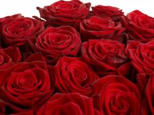 Ramo de rosas de un deslumbrante color rojo