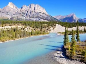 Pinos a orillas de un río azul