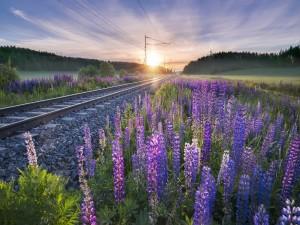 Hermosas flores a orillas de las vías del ferrocarril