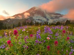 Flores silvestres al pie de las montañas