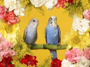 Bellos periquitos en una rama rodeada de flores