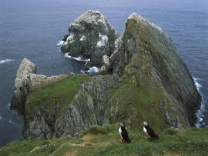 Bonitos frailecillos caminando en un gran acantilado