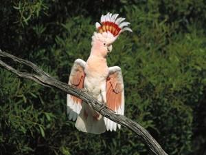 Cacatúa sobre una rama