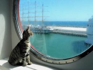 Gato en un barco
