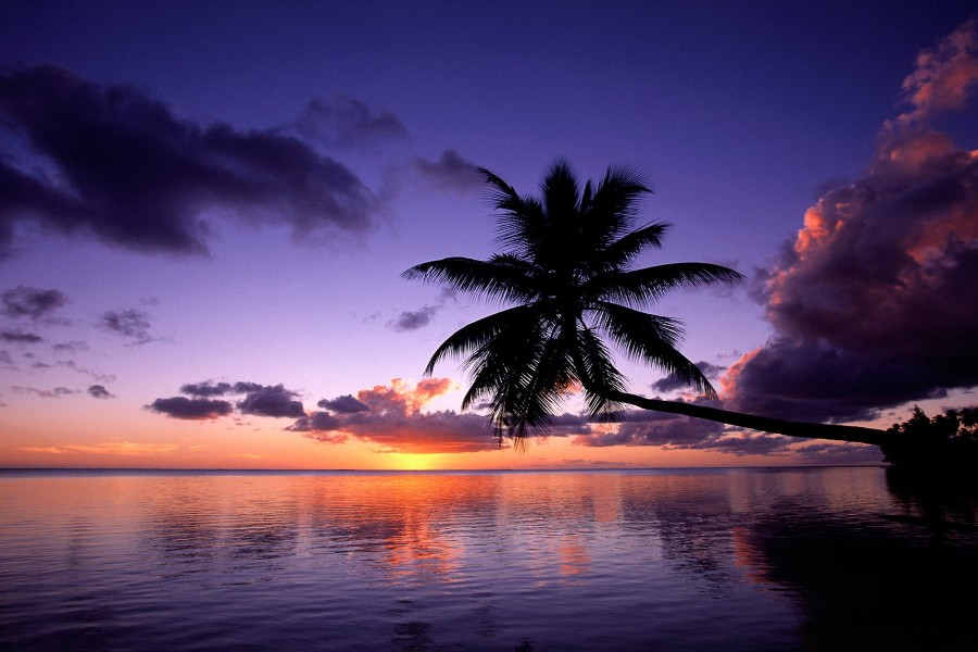 Palmera inclinada sobre el mar