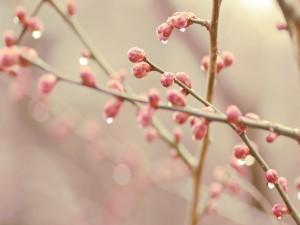 Gotas de agua sobre los brotes de flor