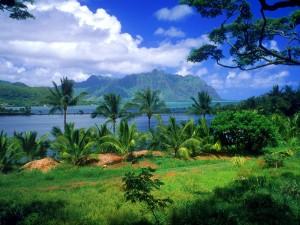 Palmeras verdes junto al mar (Oahu, Hawái)