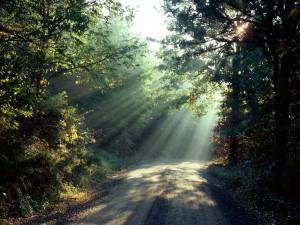 Rayos de sol iluminando el camino del bosque