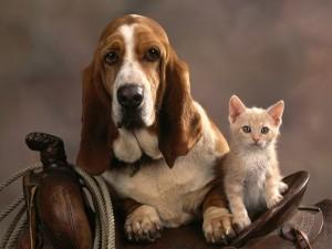 Perro y gato sobre una silla de montar