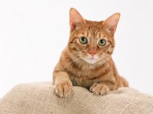 Gato afilando las uñas