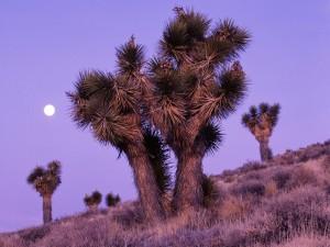 Luna en el Parque Nacional del Valle de la Muerte