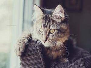 Hermoso gato junto a la ventana