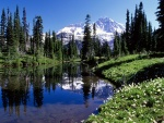 Primavera bajo el Monte Rainier