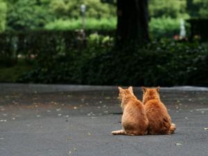 Gatos haciéndose compañía