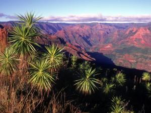 Cañón Waimea (Hawái)