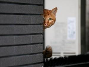 Gato espiando desde la ventana