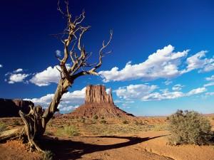 Árbol seco en el Valle de los Monumentos (Arizona)