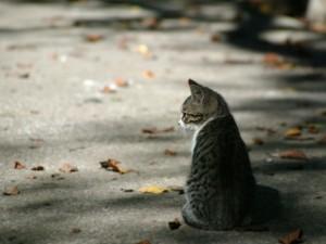 Gato sentado entre hojas otoñales