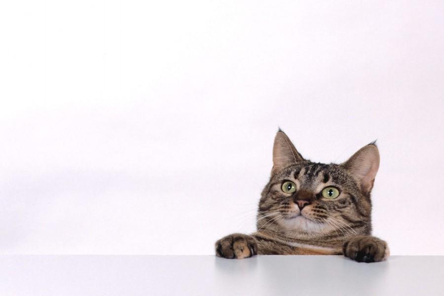 Este gato quiere comer