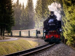 Tren de pasajeros en el bosque