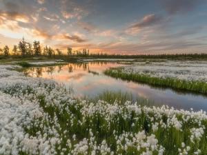 Flores blancas a orilla del lago