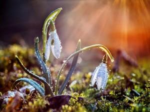 Los rayos del sol entre las flores de una planta con gotas de rocío