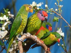 Loritos coloridos en una rama con flores