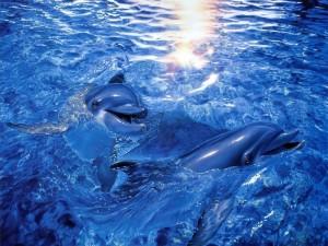 Dos delfines chapoteando en el mar