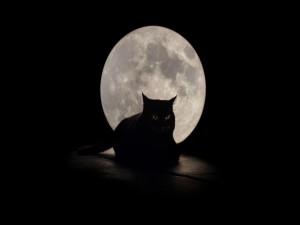 Gato negro sentado en una noche de luna llena