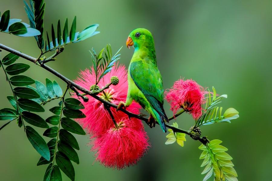 Loro verde en una rama con flores rojas