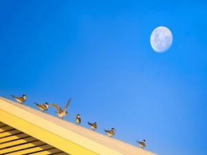 Aves posadas en el techo de una casa