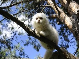 Gato sobre la rama de un abeto