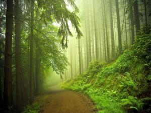 Camino en el bosque verde
