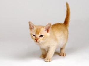 Gatito caminando