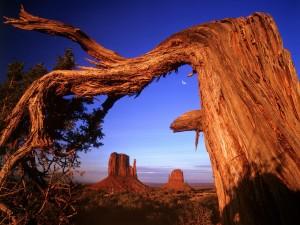 Árbol torcido en el Valle de los Monumentos (Arizona)