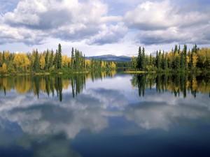 Pinos reflejados en el lago