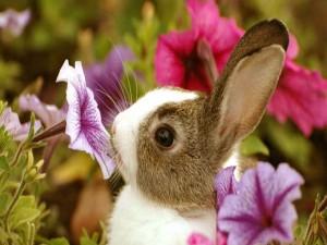 Conejo oliendo una flor violeta