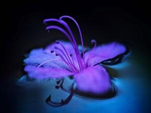 Flor lila en el agua