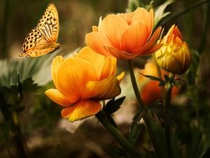 Mariposa revoloteando sobre flores de color naranja