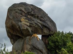 León entre las rocas