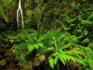 Cascada entre la densa vegetación
