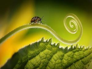 Insecto sobre el brote de una hoja