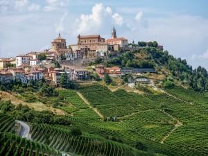 Plantaciones en La Morra (Italia)