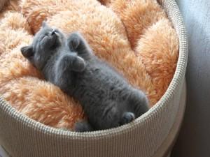 Un gatito durmiendo en una cesta