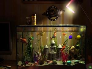 Peces de colores en el acuario
