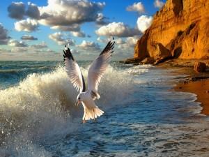 Gaviota volando a orillas del mar