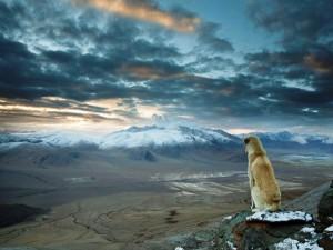 Perro contemplando el paisaje