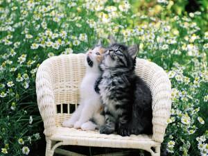 Dos gatos sentados en un sillón observando el cielo