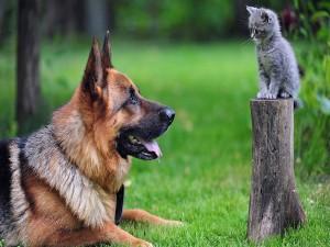 Un gatito observando con atención al perro